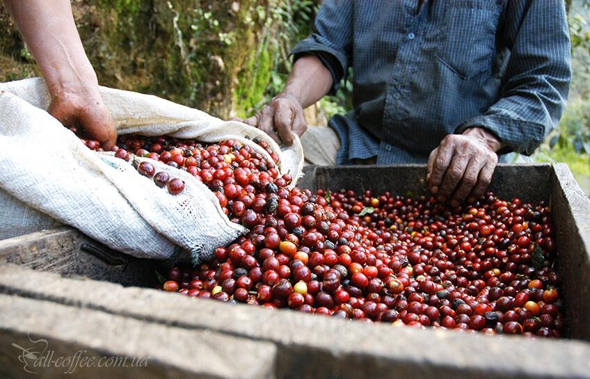 3 Guatemala