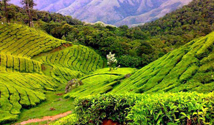 coorg685