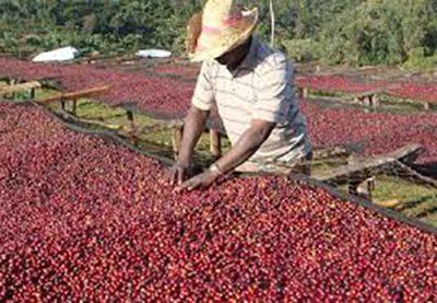 ethiopia kupit kofe icoffeeco